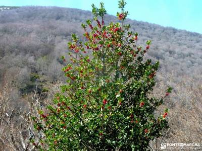 Alto Campoo;Parque Natural Saja-Besaya;espacios protegidos de asturias selva d irati turismo sierra